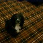 marley loved the tartan!