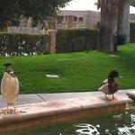 Cute birds near the outdoor dining area