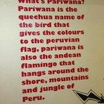 pariwana walls
