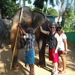 seita our elephant