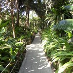 Pathway thru the jungle to the guest rooms