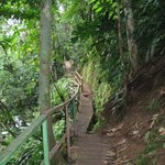 One of the many rainforest trails at Tirimbina