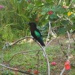 Le colibri qui pose pour la photo, à la réception !
