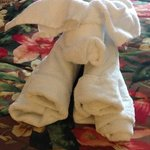 towel animal on your bed!
