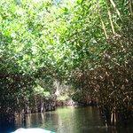 Por los túneles de los manglares