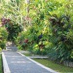 main pathway
