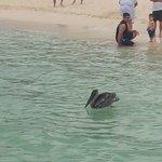 a heron taking a dip