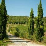 La strada di campagna che attraversa le Vigne e conduce alla Cantina