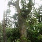 立派な樹木