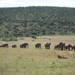 Herd of elephants walking up to the waterhole