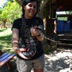 Handling a python