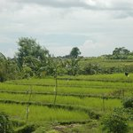 View from the balcony, overlooking the rice paddies behind the villa