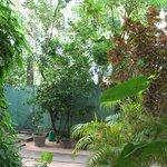 Beach Bunglow garden