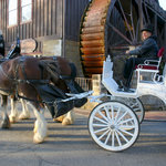 All Occasions Carriage and Pony Rides