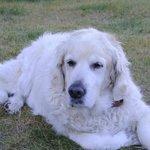 ここのINNのアイドル犬!!彼はオーロラに結構敏感に反応するらしい・・・・
