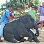 Resident Baby elephant