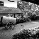 A bullock cart in a small garden at the hotel