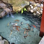 Koi pond next to our room. Beautiful landscaping.