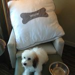 Westin Heavenly Pet Bed!! Nice Touch!