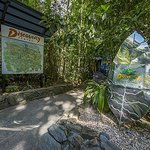 Photo provided by Daintree Discovery Centre