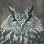 Kirkleatham Owl Center