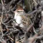 Bird photos courtesy of John Carney
