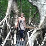 a walk amongst the incredible mangroves