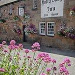 Holly Bush in bloom
