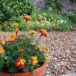 Etruria Garden