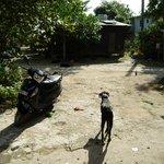 Gaza checking the yard!