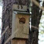 I spy a squirrel in the birdhouse
