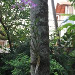 Orchid grows on the palm tree