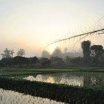 vue imprenable sur la rizière