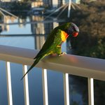 Bird at balcony