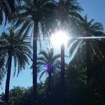 Prevelli palm beach