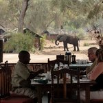 elephant in camp lunchtime