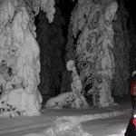 Donker bossen en veel sneeuw