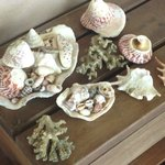 Shells that we collected on the beach in front of our bure