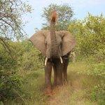 Elefant bewirft sich mit kühler Erde