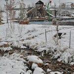 A snowy day at Centennial Center Park, Centennial, Colorado