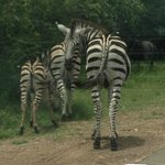 Gameviewing in Marloth Park