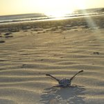 baby turtles for the first time looking to the ocean, night tours to  watch tortuguero