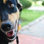 Mira, einer der tollen Wachhunde!