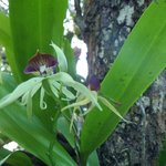 Orchid growing in tree in grounds