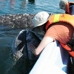 Sharing the love with a baby Gray Whale