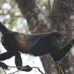 Monkey's off the balcony