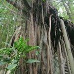 Almost like Angkor Wat...