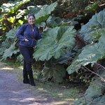 Espectacular vegetación, hojas gigantes.