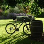 Wine barrel bicycle rack with guest bicycles