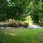 Walnut trees provide tons of shade in summer